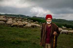 Sheppard tends his sheep